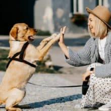 """""""Não pude acreditar"""": Cachorro fugiu de casa para procurar sua tutora no escritório"""