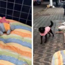 Vídeo mostra como morador de rua cuida bem de seus 2 cachorros