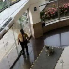 Vigilante de um shopping viu cachorros de rua tomando chuva e resolveu fazer algo