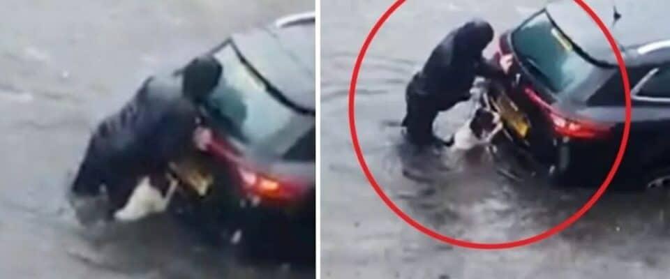 Cachorro ajuda sua humana a empurrar o carro por uma rua inundada