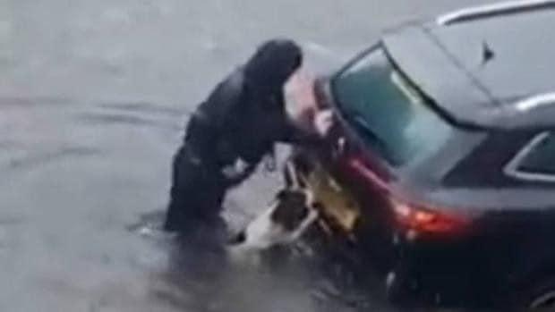 Cachorro ajuda sua humana 2