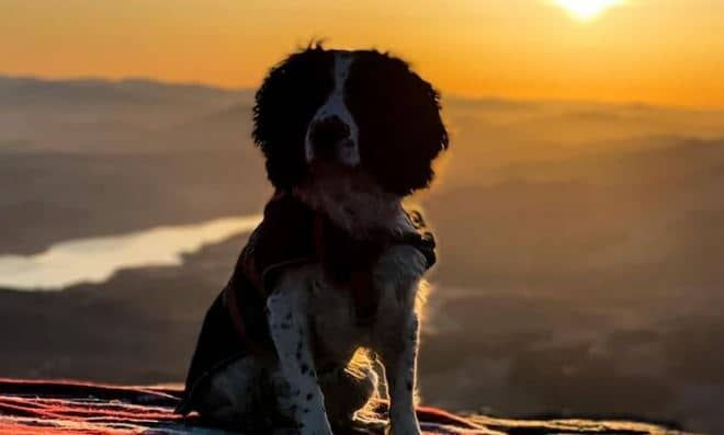 Cachorro ajuda sua humana 5