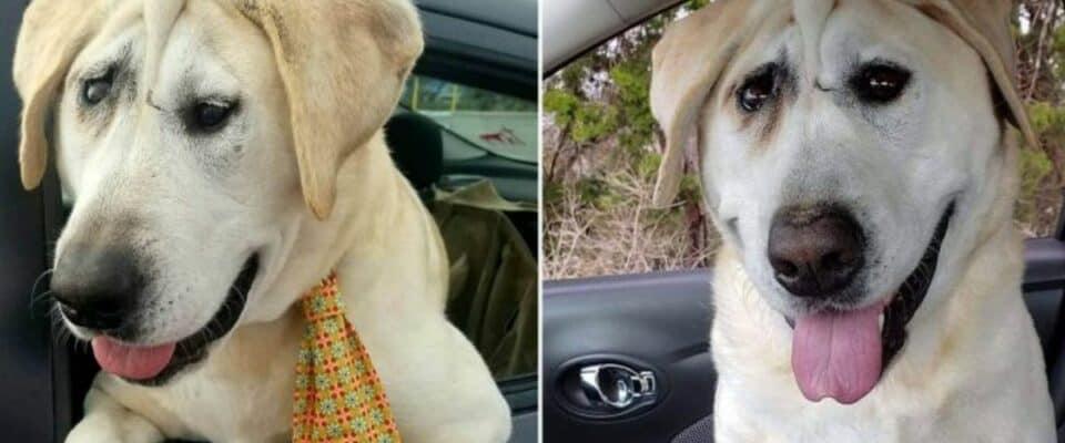 Cachorro é rejeitado repetidamente até que uma mulher veja sua beleza