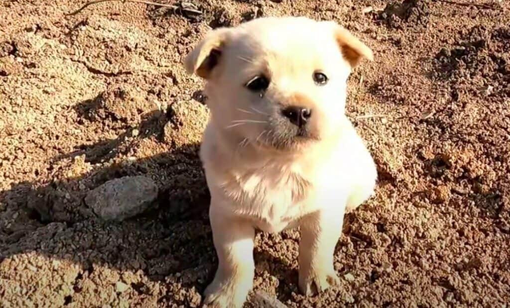 Cachorro encontrado abandonado 2