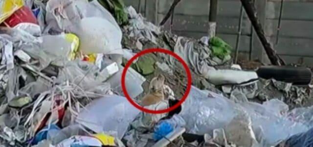 Cachorro encontrado abandonado no lixão parece chamar pela sua mãe