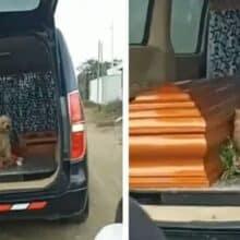 Cachorro fiel insiste ficar ao lado do dono falecido até o enterro