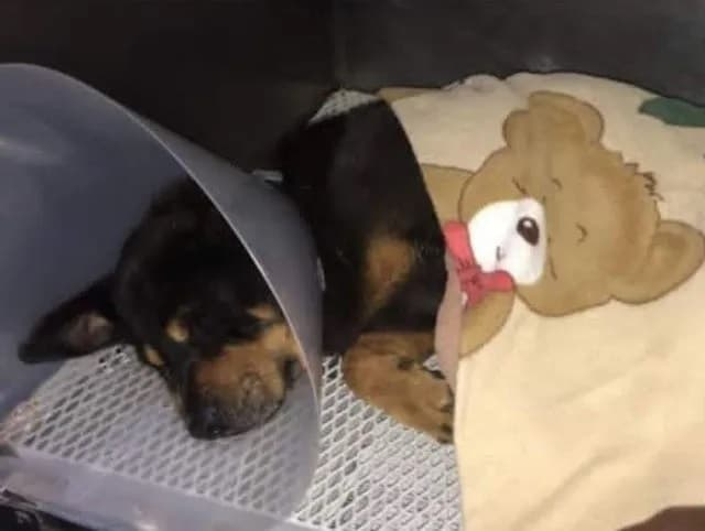 Cachorro prestes a morrer é resgatado 2