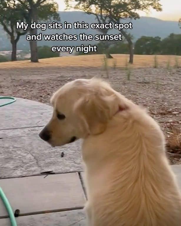 Cachorro senta no mesmo lugar 4
