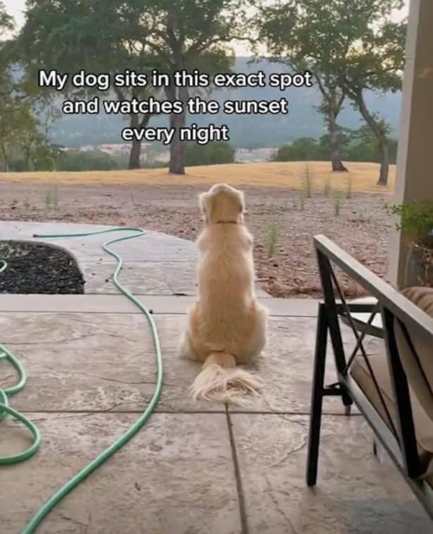 Cachorro senta no mesmo lugar 5