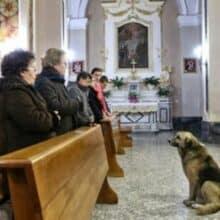 Cão assiste à missa todos os dias onde estava o funeral da sua tutora
