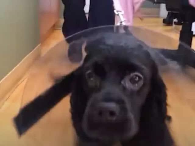 Cão cego olha para sua mãe 2