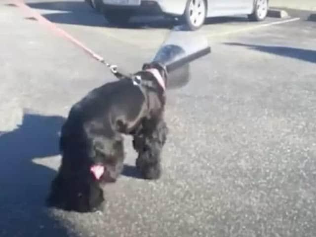 Cão cego olha para sua mãe 3