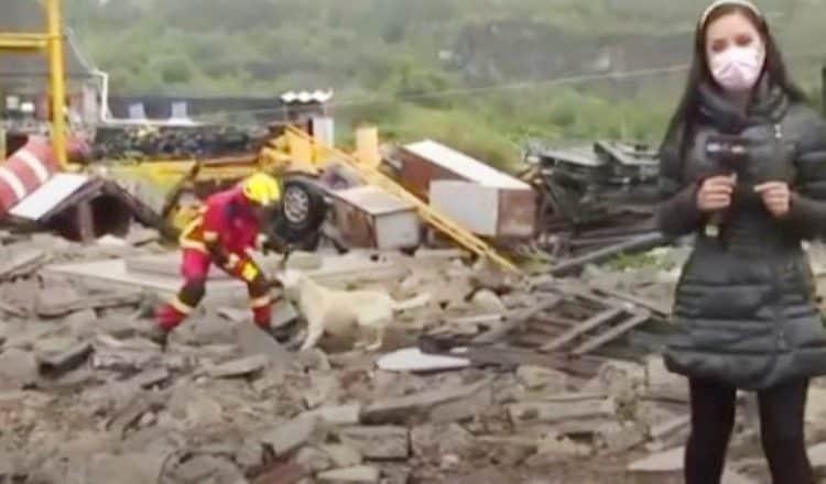 Cão e bombeiro brigam 2