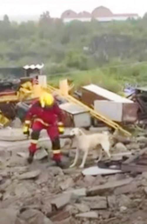 Cão e bombeiro brigam 4