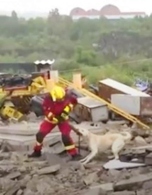 Cão e bombeiro brigam 5