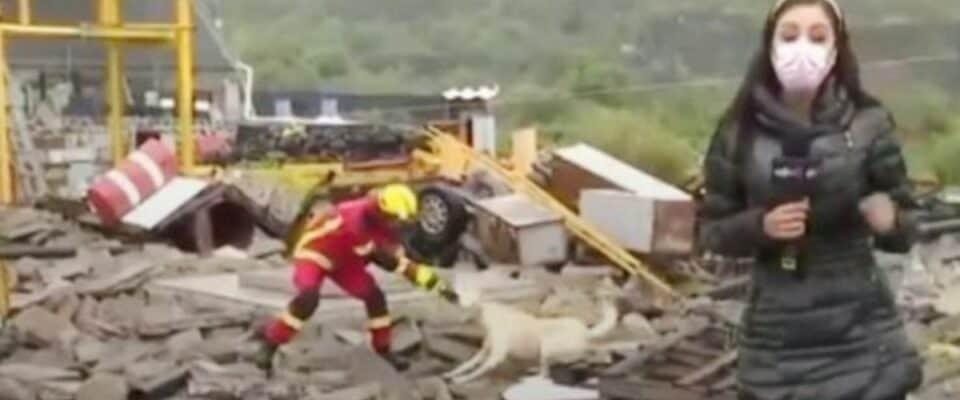 Cão e bombeiro brigam por um trapo durante um noticiário ao vivo