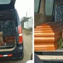 Cão fiel insiste em ficar ao lado da tutora falecida até o seu enterro