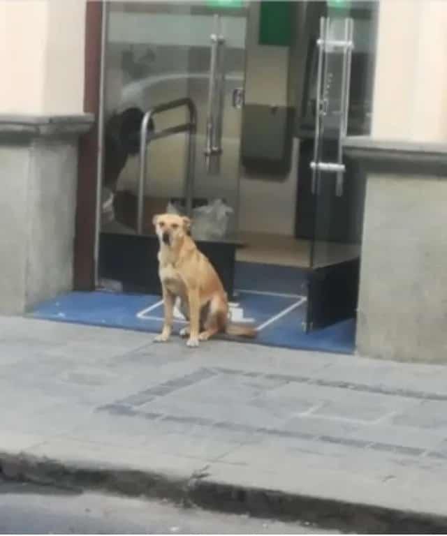 Cão foi abandonado em um banco 2