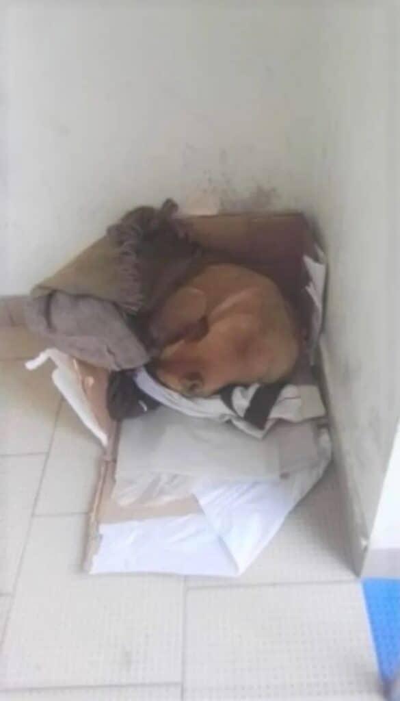 Cão foi abandonado em um banco 3