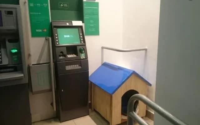 Cão foi abandonado em um banco 4