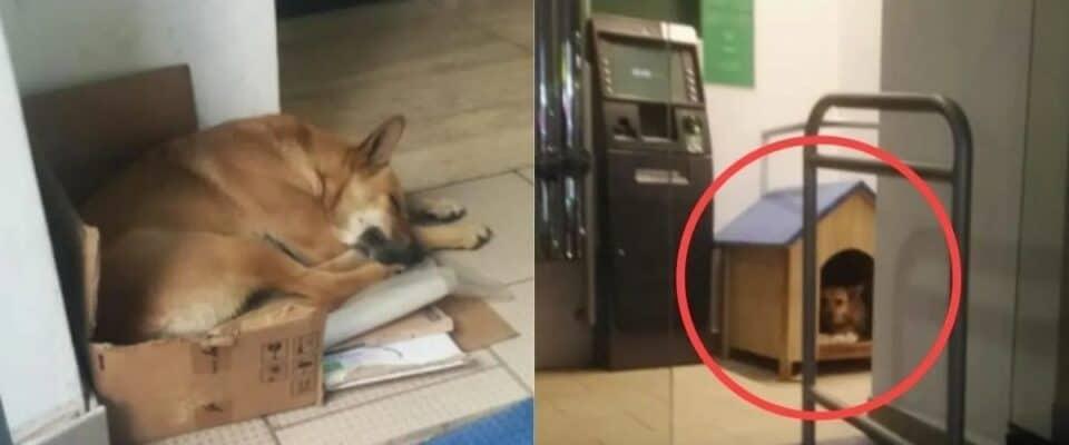 Cão foi abandonado em um banco e os funcionários compraram uma casinha para ele