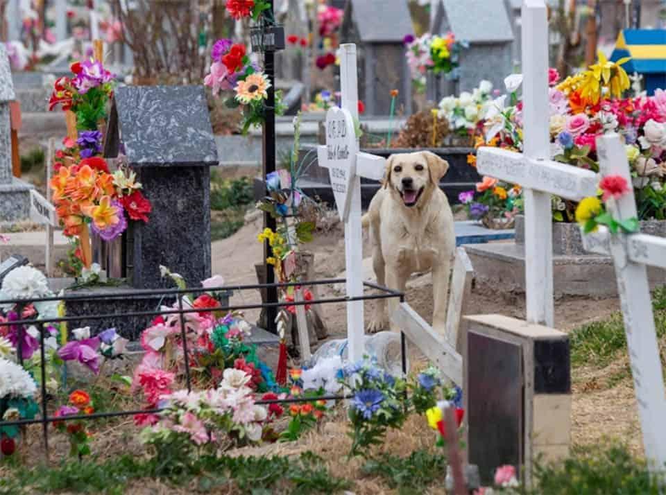 Cão que nunca saiu do cemitério 2