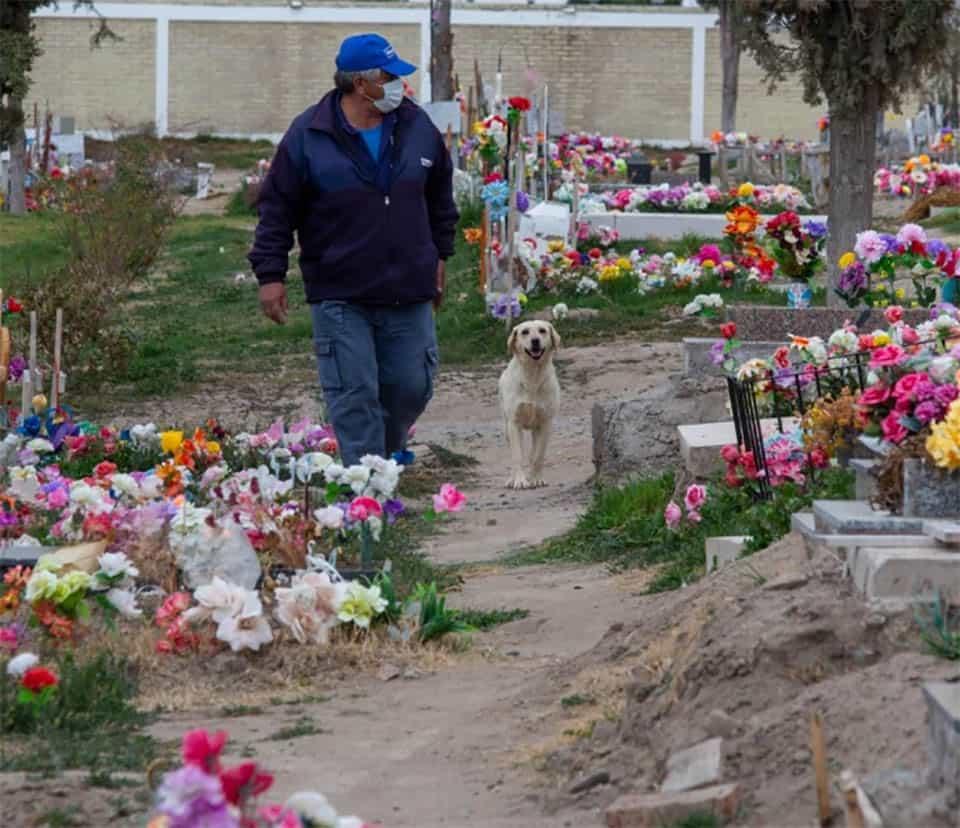 Cão que nunca saiu do cemitério 3