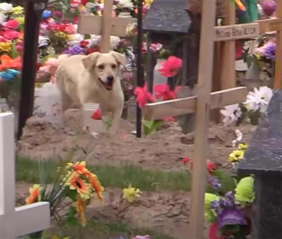 Cão que nunca saiu do cemitério 4