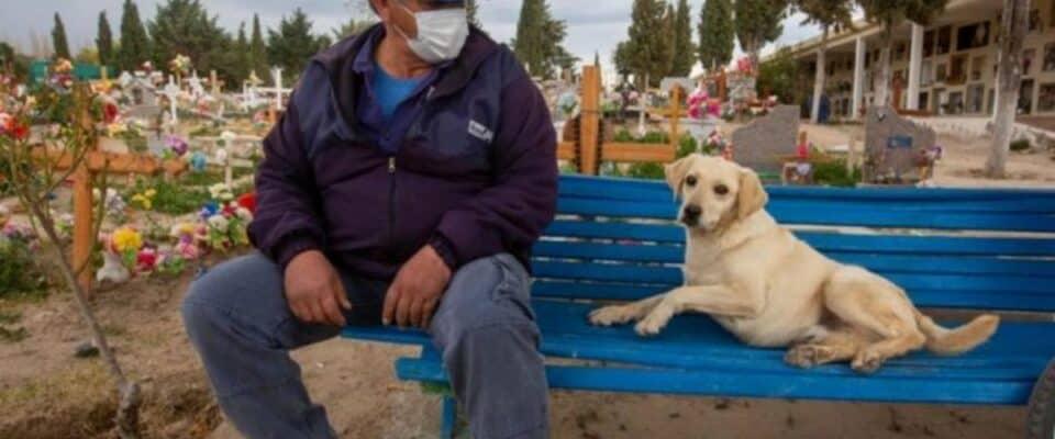 Cão que nunca saiu do cemitério depois que seu tutor faleceu agora conforta as pessoas