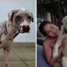 Cão sem pelos encontrado em um posto de gasolina é resgatado