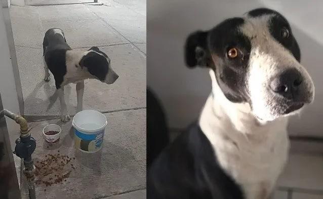 Eles resgatam um cão que era usado 2