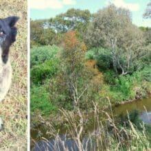 Garotinha desaparecida é encontrada graças ao seu cão