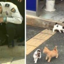 Gatinha de rua leva todos seus filhotes para delegacia de polícia e lá ela ganha um lar para sempre