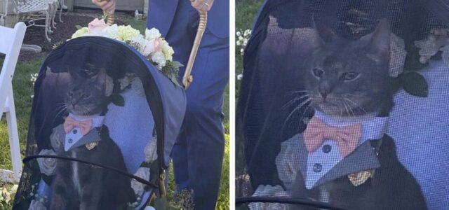 Gato encarregado de levar as alianças no casamento rouba a cena