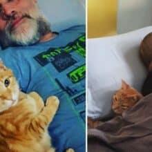 Gato entra na casa de seus vizinhos todas as noites para dormir com eles