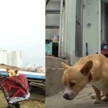 Idosa resgata cachorro paralisado abandonado em um depósito de lixo