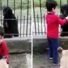 Menino dividi a comida do seu cachorro com um cachorro na rua