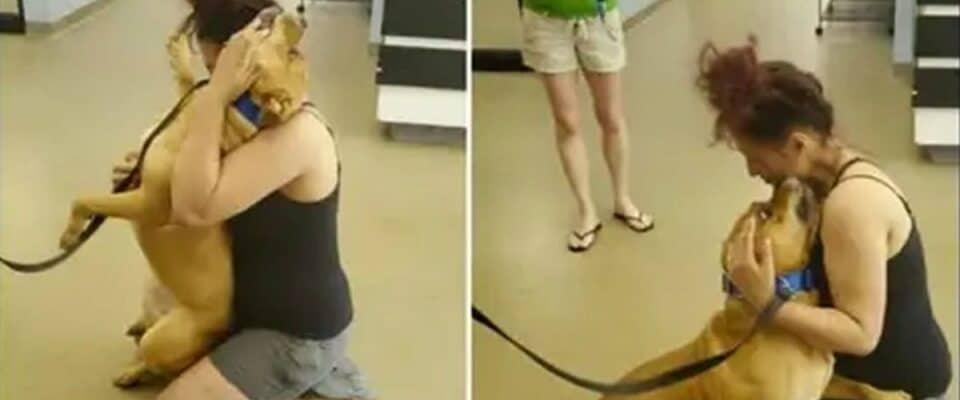 Mulher foi a um abrigo para adotar e encontrou seu cão perdido há dois anos