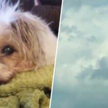 Mulher olha para o céu e vê imagem de seu cão nas nuvens