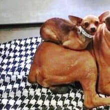 Ninguém queria adotar cães unidos, mas uma foto atraiu a atenção das pessoas