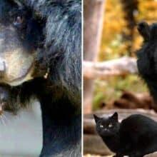 O vínculo de 10 anos entre um gato doméstico e um urso chama atenção