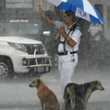 Policial compartilha guarda-chuva com cães de rua durante forte tempestade