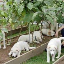 Presidente sul-coreano sugere proibição de comer carne de cachorro