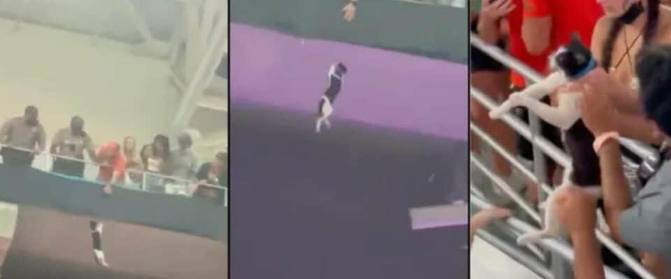 Torcedores do Miami salvam gato caindo com bandeira