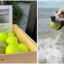 Tutor monta estande de bola de tênis grátis na praia em homenagem ao seu cachorro que faleceu
