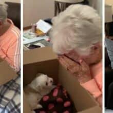 Avó chora depois de ser surpreendida com um novo filhote de cachorro