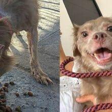 Cachorrinho amarrado escapa e é resgatado, hoje ele está muito feliz