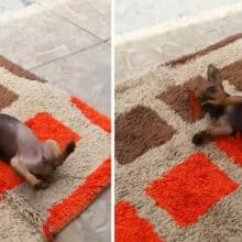 Cachorrinho compartilha lindo momento com uma borboleta