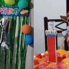 Cachorrinho faz 1 ano e seu tutor faz festa de aniversário