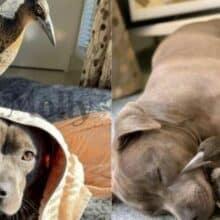 Cachorro adota pássaro ferido como seu filho e até a ensina a latir